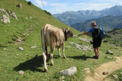 144-Kuh-und-Willi